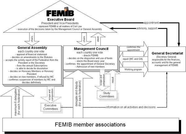 Organisation of FEMIB according to the statues